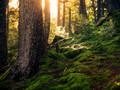 唯美森林景色图片壁纸大全