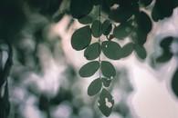 清新护眼光影植物图片壁纸