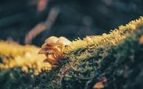 雨后野生蘑菇图片壁纸