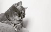 可爱猫咪高清图片壁纸2