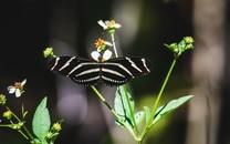 美丽的蝴蝶摄影图片壁纸