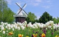 白色风车图片-白色风车壁纸大全