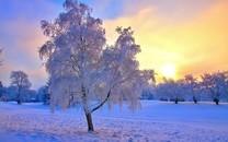 冬天的景色图片-冬天景色图片大全