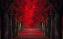 火红的秋季唯美暮秋壁纸