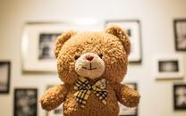 可爱的玩具熊图片壁纸
