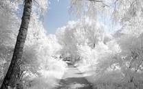 好看的冬季雪景风景图片桌面壁纸2