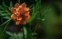 低角度拍摄花图片壁纸