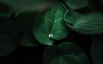 绿色植物微距摄影高清图片壁纸