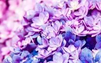 美丽的花卉背景图片壁纸