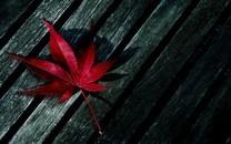 秋天的枫叶图片壁纸