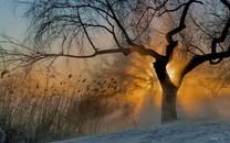 清晨雾图片-清晨雾图片壁纸大全