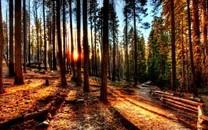 树林图片壁纸-高清树林图片大全