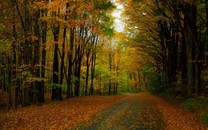 树林壁纸-树林壁纸图片大全
