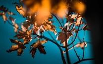 唯美秋叶自然风景高清图片壁纸