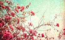 古开花色阴暗之美壁纸图片