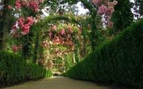 唯美园艺图片-唯美园艺图片壁纸大全