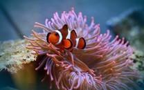 最标致的海底天下图片壁纸2