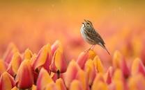 精选展翅飞翔的小鸟高清图片壁纸2