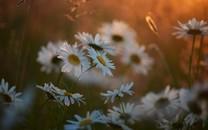 百花怒放优游雅的鲜花图片壁纸
