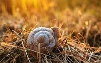 顽强的蜗牛图片壁纸