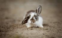 简略心爱小清爽兔子图片壁纸2