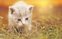 乖巧可爱的小猫咪图片壁纸3