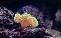 清透海底珊瑚唯美图片壁纸