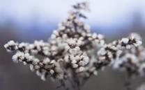 新唯美的花卉图片壁纸2