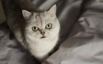 春日心爱猫咪图片壁纸
