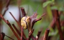 顽强的蜗牛高清图片壁纸
