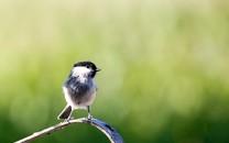 心爱的鸟儿图片壁纸