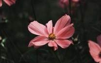 微距花朵图片壁纸