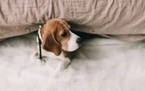 可爱的狗狗摄影高清图片壁纸