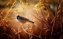 精选展翅飞翔的小鸟高清图片壁纸