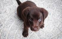 心爱狗狗高清图片壁纸