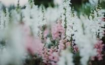 唯优游心境昏黄花朵图片壁纸