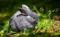 软萌心爱的小兔子图片壁纸2