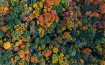 绿色森林河流大自然风景俯视风景壁纸