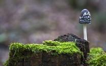 标致的真菌小蘑菇图片壁纸2