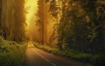 林间的公路风景图片壁纸