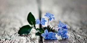 小清新花卉高清图片壁纸