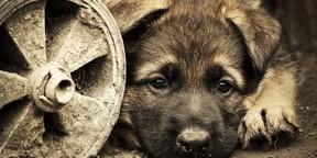 可爱狗狗大头照桌面壁纸