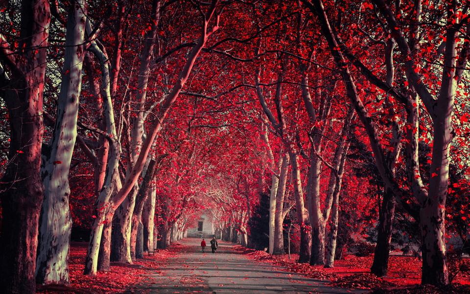 笔记本壁纸 自然风景壁纸 森林自然景色桌面壁纸下载