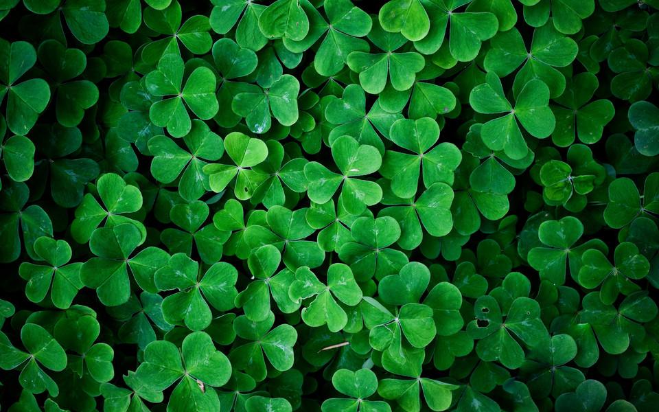 三叶草绿色护眼壁纸 第9页-zol桌面壁纸