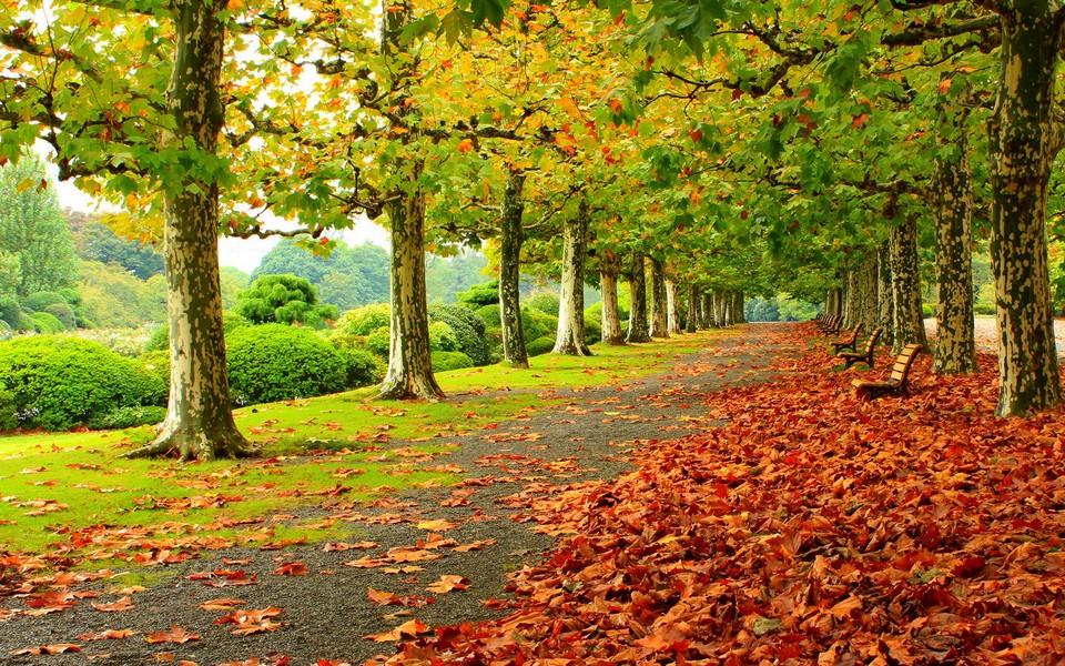 电脑壁纸 自然风景壁纸 林荫大道自然景色壁纸下载