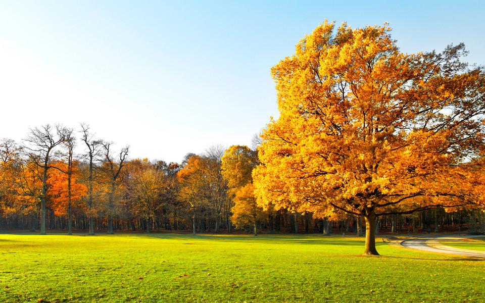 秋天风景壁纸大全
