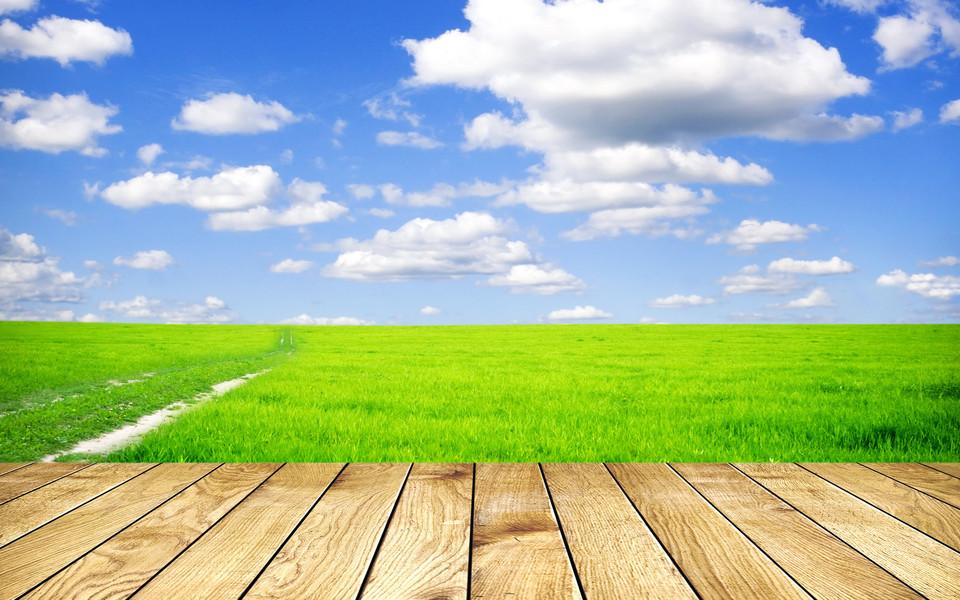 壁纸 草原 成片种植 风景 植物 种植基地 桌面 960_600