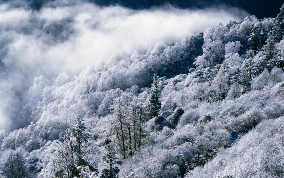 雪中高清风景平板壁纸