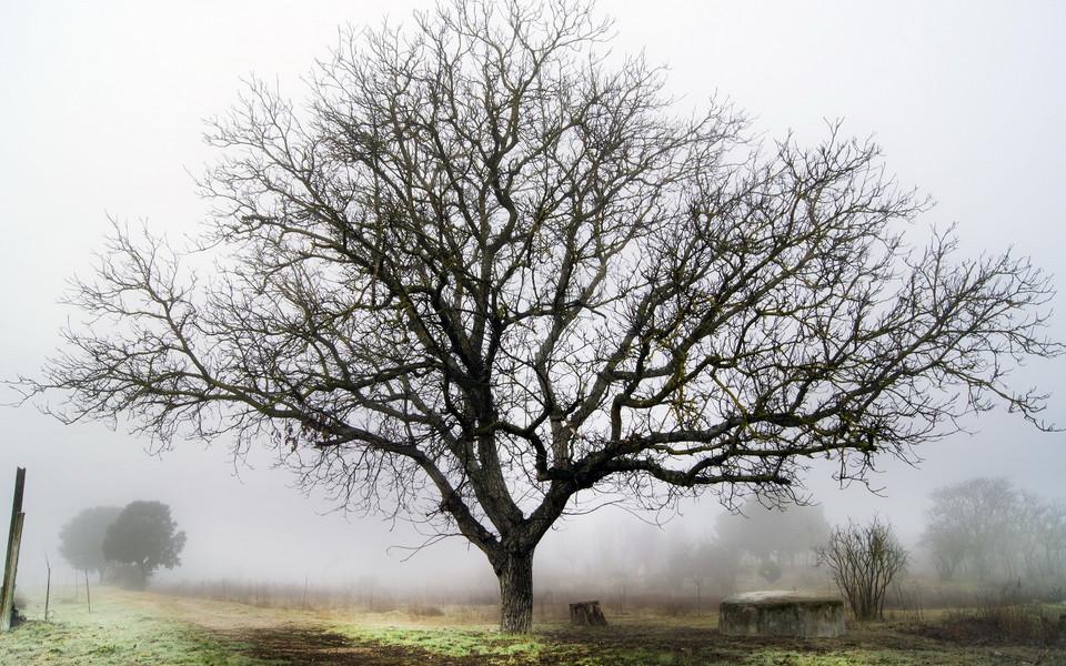 迷雾森林高清桌面壁纸
