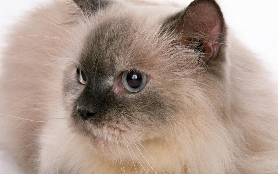 黑白相间的可爱小猫